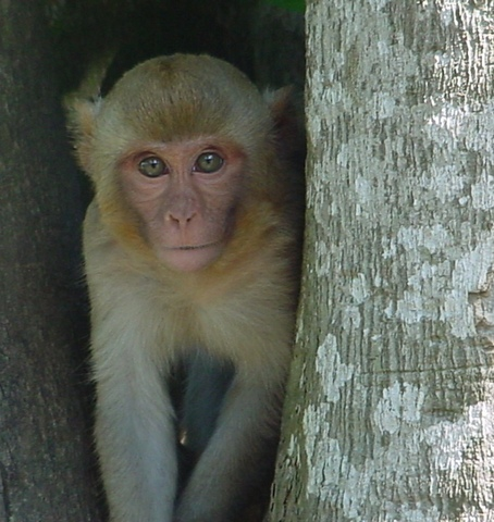 9:31PM First Monkeys