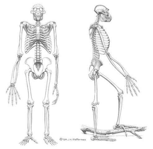 11:02PM Oldest Direct Human Ancestor
