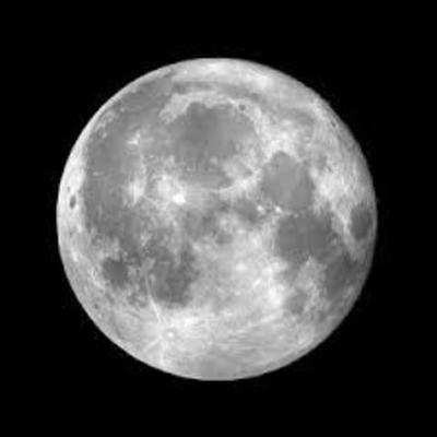 הירח טליה זביב timeline