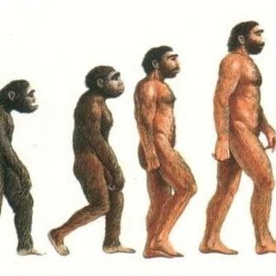 Línia Evolutiva de l´Home. timeline