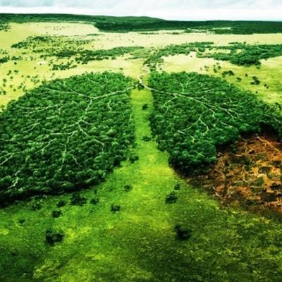 Historia sobre el Medio Ambiente timeline