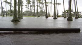 Historic Floods in Hawaii timeline