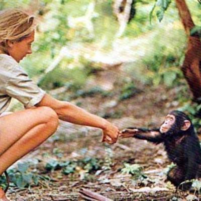 Jane Goodall timeline