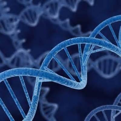 Los principales acontecimientos del DNA. timeline