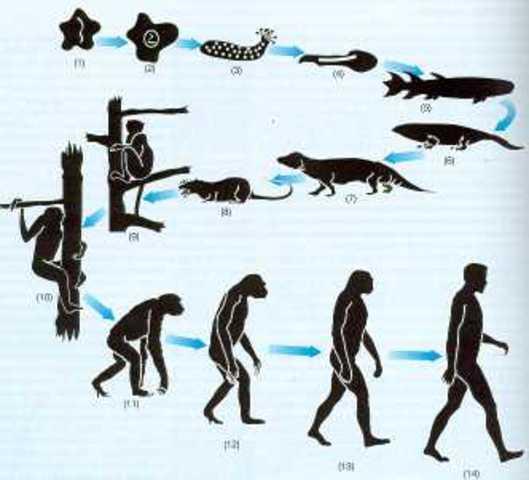 Charles Darwin, seleccion natural