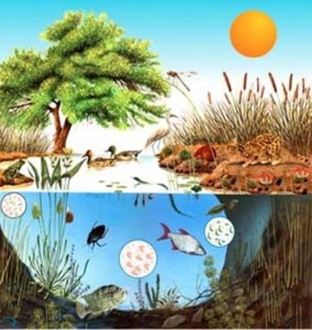 Descripciones detalladas de ecosistemas, que desde entonces se han convertido en modelos clásicos; fueron realizadas por Teal, H.T. Odum y otros.