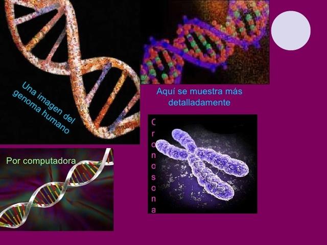 Los principales descubrimientos del dna timeline for En 2003 se completo la secuenciacion del humano
