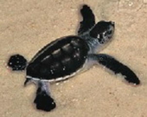 Sea Turtle Society Earth Day Carnival