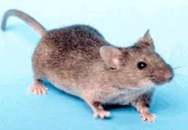 Genoma del ratón