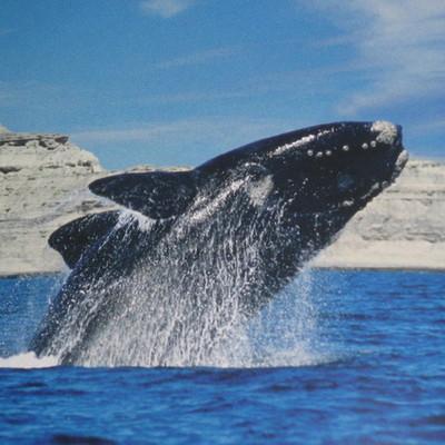 Viaje a Puerto Madryn timeline
