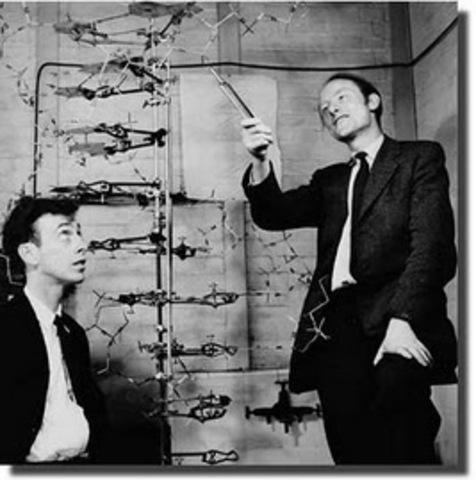 James Watson y Fracis Crick