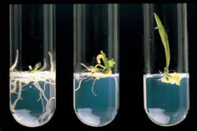 Primeras plantas transgénicas