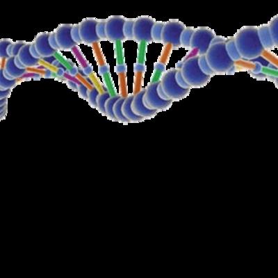 Linea del tiempo sobre la historia de la Genética timeline