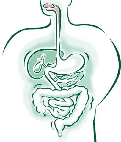 Lazaro Spallanzani realiza experimentos que demuestran que la digestión es un proceso químico y no la molienda mecánica de la comida.