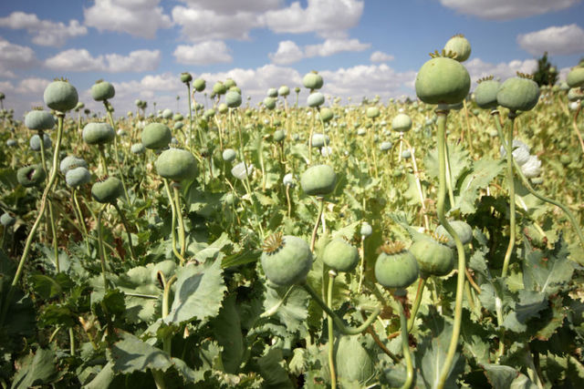 Friedrich Sertürner aísla la morfina de la planta de opio.