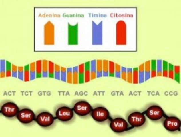 Craig Ventner y sus colegas publican el código genético completo del ratón de laboratorio.