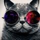 Mejores fondos de pantalla hd gato con lentes
