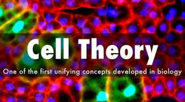 Cell Theory Timeline by David Robins