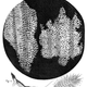 300px cork micrographia hooke