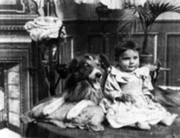 First Dog Movie