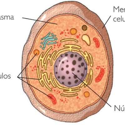 Descubrimiento de los orgánulos celulares timeline