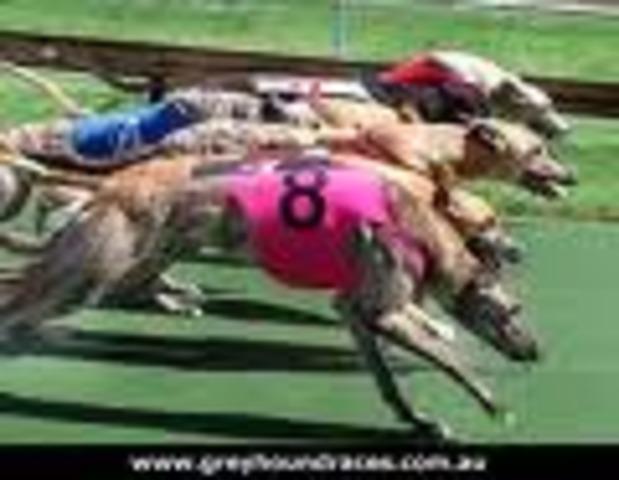 Greyhound   39