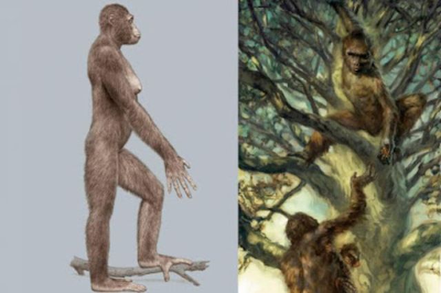 Resultado de imagen de El entorno en que vivían Ardipithecus ramidus