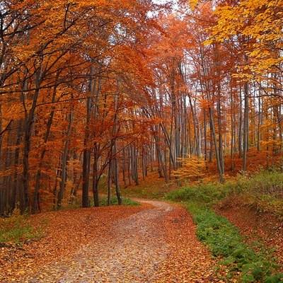 Az ősz timeline