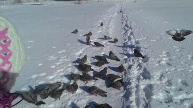 """Пост """"Как мы готовились ко Дню птиц"""""""