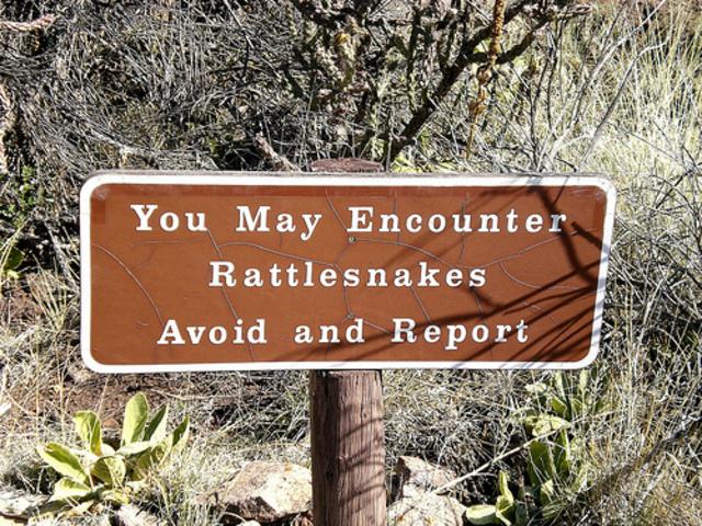 Rattlesnakes!