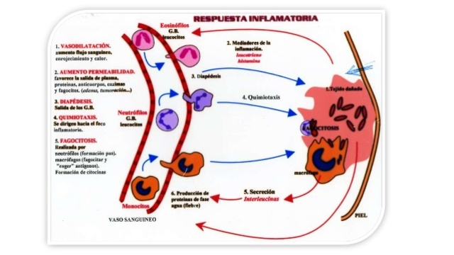 Fase de inflamación