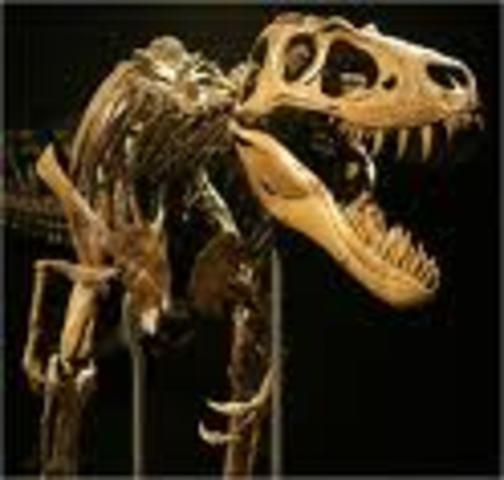 Dinosaur Extinction-1st Large Primates