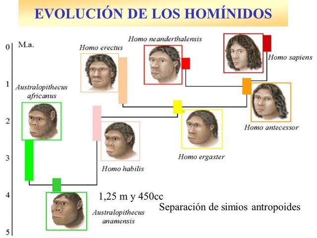 ORGIEN MOVIMIENTO HOMINIDOS 3 MILLONES DE AÑOS