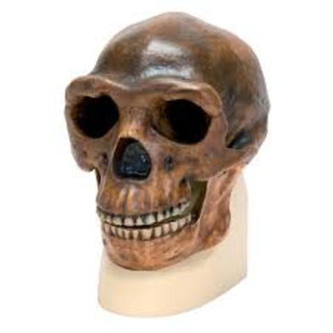Homo erectus 750,000 AÑOS a.C