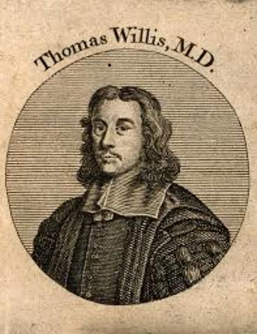 Thomas Willis SIGLO XVI
