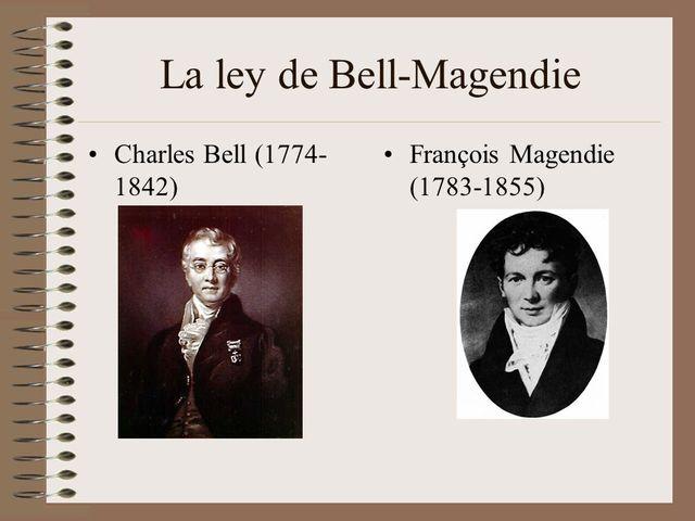Charles Bell Y François Magendie  SIGLO XVIII