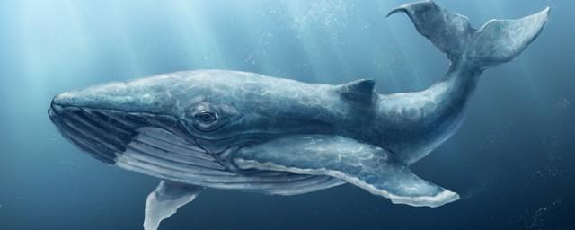Всемирный день защиты морских млекопитающих или Всемирный день китов