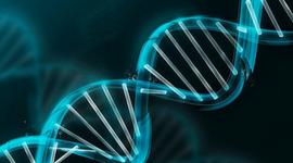История развития генетики timeline