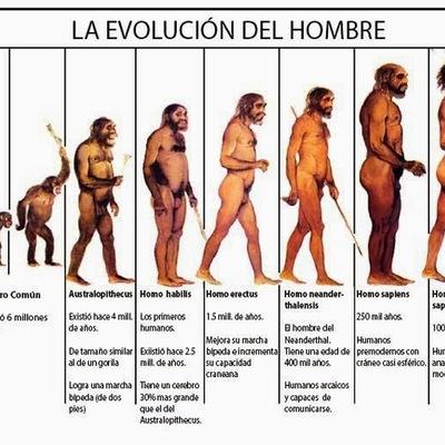 Evolución Humana timeline