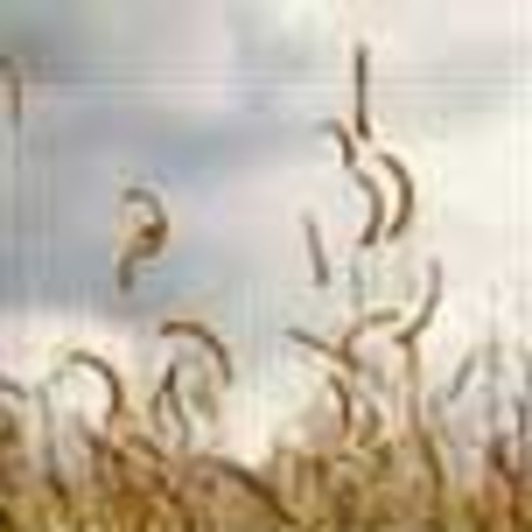 The State Grass