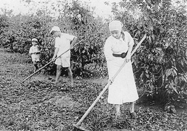 plantation work