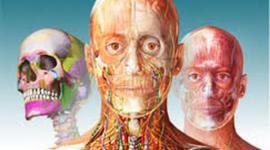Linea del tiempo Anatomía Humana timeline