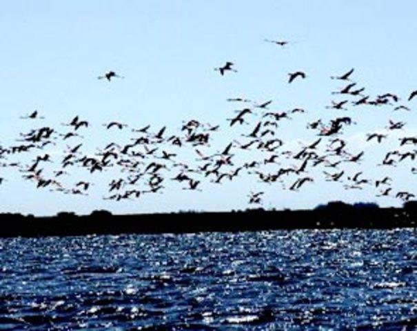 Día Cinco — Mar criaturas incluyendo los peces y las aves