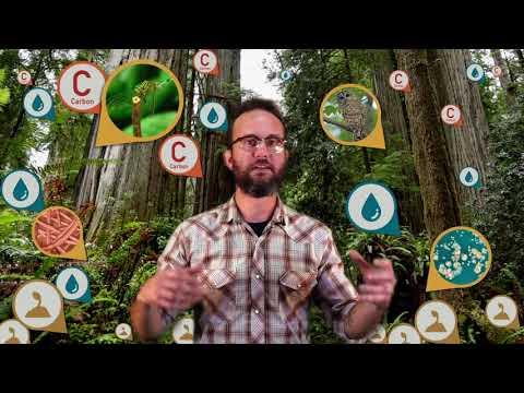 Complexicon: Keystone Species thumbnail