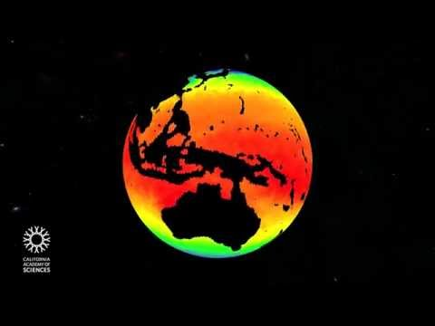 Fragile Planet   California Academy of Sciences thumbnail