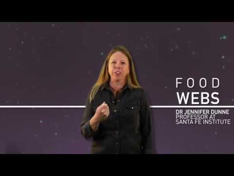 Complexicon: Food Webs thumbnail
