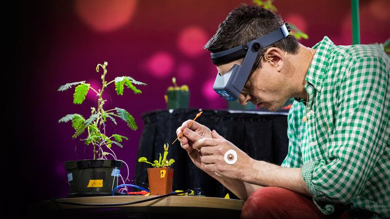 Electrical experiments with plants that count and communicate thumbnail