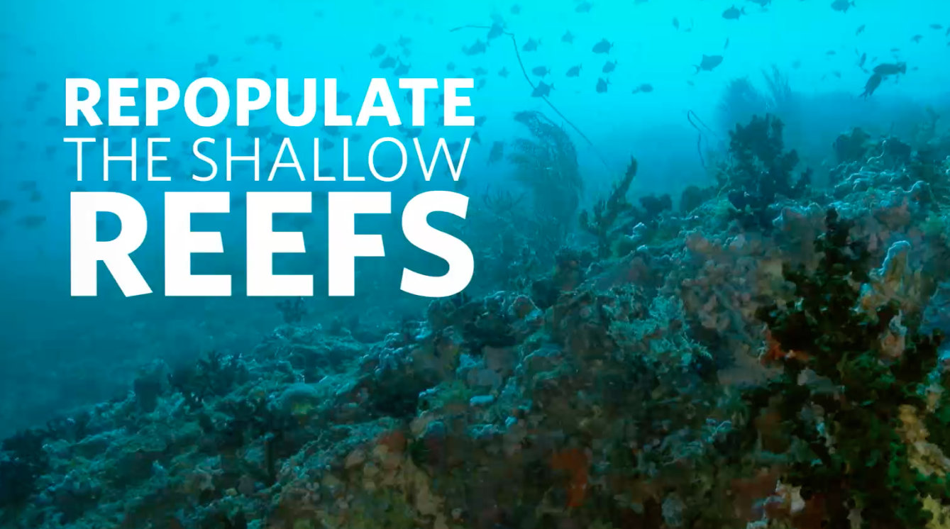 Healthy Oceans: Coral Reefs and Climate Change | California Academy of Sciences thumbnail