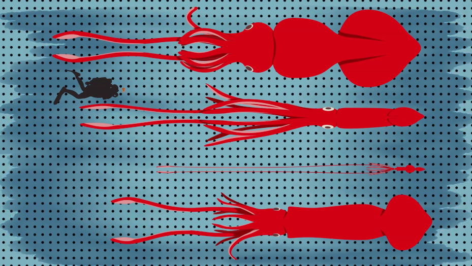 Science Today: Super-sized Squid   California Academy of Sciences thumbnail