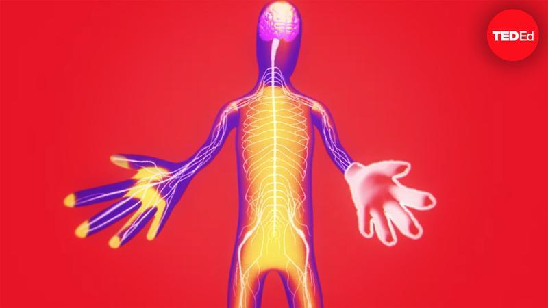 The fascinating science of phantom limbs - Joshua W. Pate thumbnail